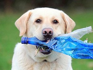The Dog Who Helps To Recycle Plastic Bottles